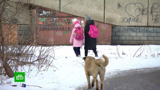 Бродячие собаки атакуют: вКрасноярске не могут справиться со стаями псов.животные, Красноярск, нападения, собаки.НТВ.Ru: новости, видео, программы телеканала НТВ