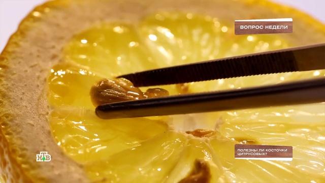 Полезныли косточки цитрусовых?НТВ.Ru: новости, видео, программы телеканала НТВ