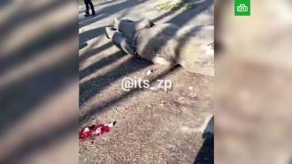 Вукраинском парке ребенка насмерть придавило скульптурой