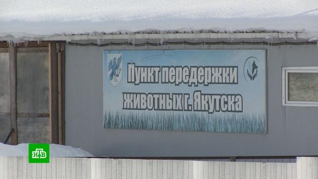 Прокуратура проверяет «кровавый» якутский приют.Якутия, жестокость, животные, кошки, приюты для животных, смерть, собаки.НТВ.Ru: новости, видео, программы телеканала НТВ