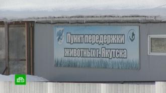 Прокуратура проверяет «кровавый» якутский приют