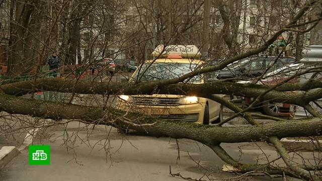 ВМоскве штормовой ветер привел кзадержкам рейсов иповалил 125деревьев.Москва, погода, стихийные бедствия, штормы и ураганы.НТВ.Ru: новости, видео, программы телеканала НТВ