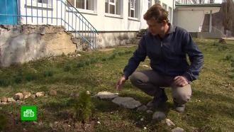 Суд оправдал распилившего сухое дерево жителя Кубани