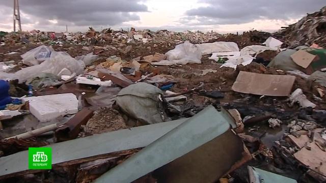 Экологический надзор обнаружил формальдегид и фенол в пробах с нелегальной свалки в Колтушах.Ленинградская область, мусор, экология.НТВ.Ru: новости, видео, программы телеканала НТВ