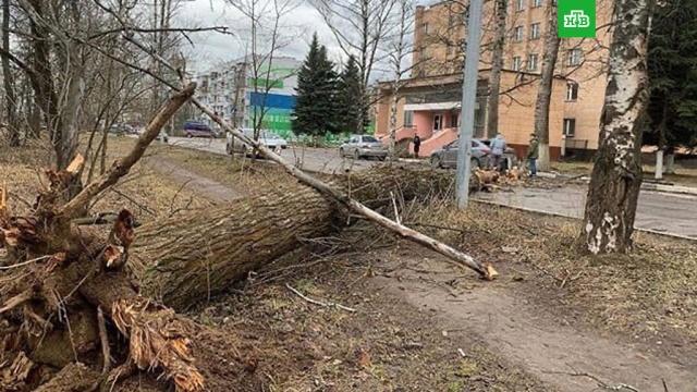 ВМоскве иПодмосковье штормовой ветер повалил десятки деревьев.Москва, погода, стихийные бедствия, штормы и ураганы.НТВ.Ru: новости, видео, программы телеканала НТВ