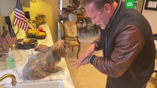 Шварценеггер поучил собаку правильно мыть руки.Голливуд, Шварценеггер, артисты, болезни, знаменитости, эпидемия.НТВ.Ru: новости, видео, программы телеканала НТВ