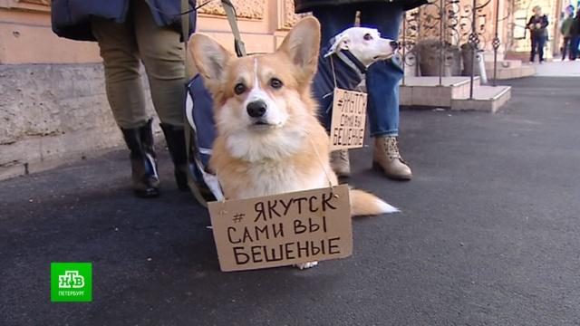 Петербургские зоозащитники требуют наказать якутских чиновников за массовое убийство животных.Санкт-Петербург, животные, Якутия, приюты для животных, собаки, жестокость, кошки, смерть.НТВ.Ru: новости, видео, программы телеканала НТВ