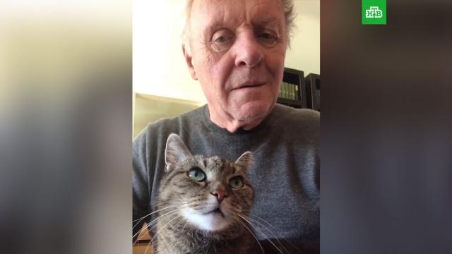 Играющий на пианино Энтони Хопкинс и его кот растрогали пользователей Сети.животные, знаменитости, кошки, музыка и музыканты, соцсети.НТВ.Ru: новости, видео, программы телеканала НТВ