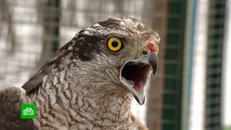 В«Кузнецком Алатау» за зиму выходили десятки диких птиц