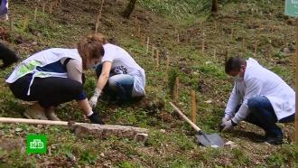 Кгодовщине Победы внацпарке Сочи высадили самшитовую рощу