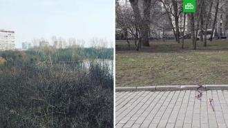 Москвичей через громкоговорители призывают не покидать квартиры