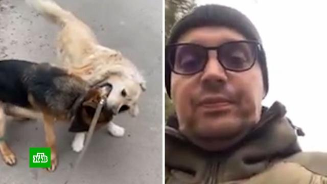 Рэпер Гуф впрямом эфире натравил овчарку на соседского пса.жестокость, животные, знаменитости, музыка и музыканты, собаки.НТВ.Ru: новости, видео, программы телеканала НТВ