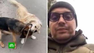Рэпер Гуф впрямом эфире натравил овчарку на соседского пса