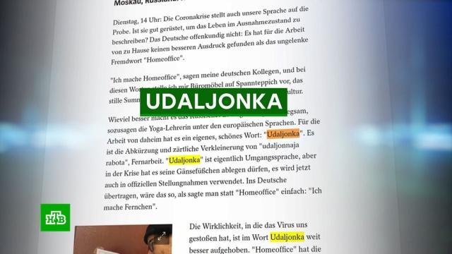 Немецкого журналиста очаровала «уютная русская удаленка».Германия, болезни, журналистика, коронавирус, работа, эпидемия.НТВ.Ru: новости, видео, программы телеканала НТВ