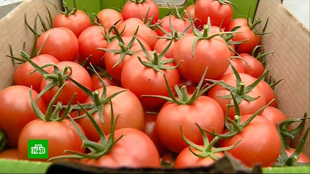 Россияне могут остаться без импортных помидоров.еда, импорт, магазины, торговля, экономика и бизнес.НТВ.Ru: новости, видео, программы телеканала НТВ