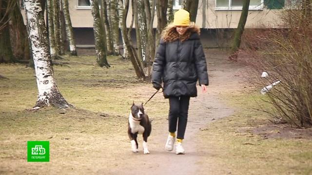 Чем занять собаку во время карантина.Санкт-Петербург, ветеринария, животные, карантин, коронавирус, собаки, эпидемия.НТВ.Ru: новости, видео, программы телеканала НТВ