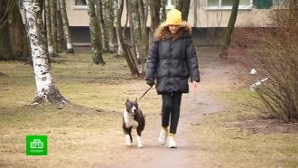 Чем занять собаку во время карантина