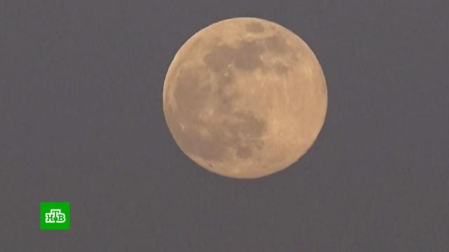 Москвичи увидели гигантскую Луну.Луна, Москва, астрономия, космос, наука и открытия.НТВ.Ru: новости, видео, программы телеканала НТВ