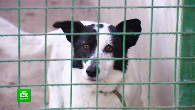 «Пригласи меня на карантин»: как петербургские зоозащитники дарят собакам временный дом.Санкт-Петербург, благотворительность, животные, карантин, коронавирус, кошки, собаки.НТВ.Ru: новости, видео, программы телеканала НТВ