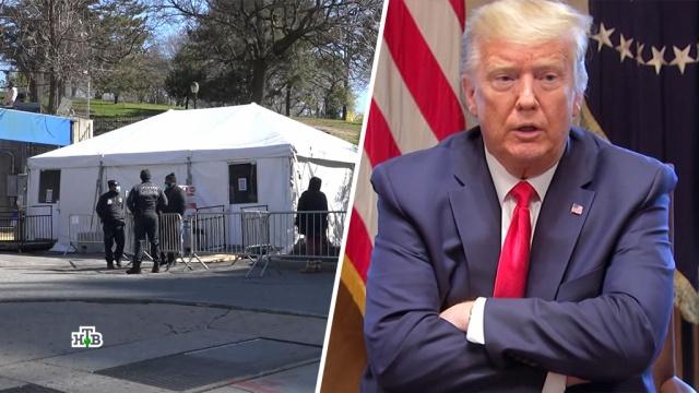 «Открыть Америку снова»: Трамп намерен снять карантин вопреки предостережениям.США, Трамп Дональд, карантин, коронавирус, эпидемия.НТВ.Ru: новости, видео, программы телеканала НТВ