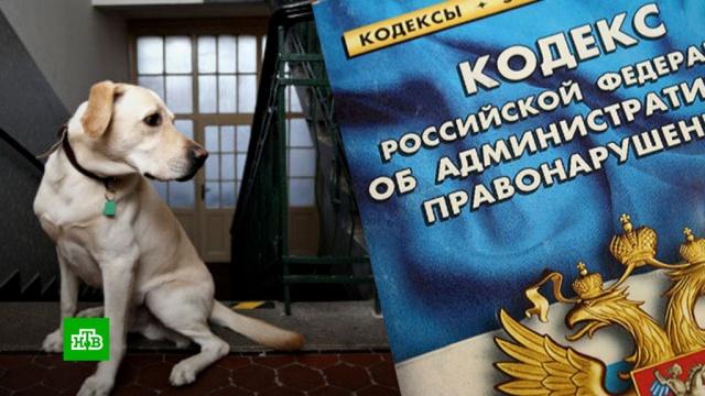 Россиян предлагают штрафовать за ночной лай собак иавтосигнализации.Минюст РФ, автомобили, законодательство, собаки, штрафы, шум, Совет Федерации.НТВ.Ru: новости, видео, программы телеканала НТВ