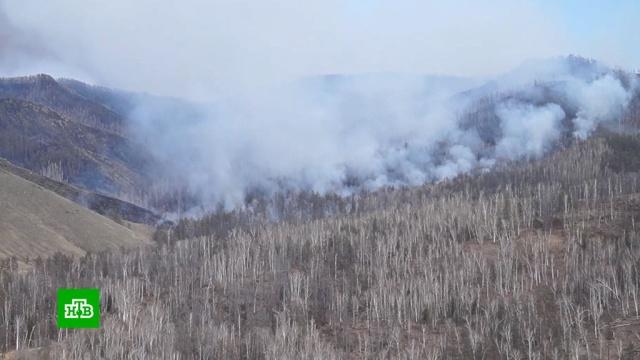 В России за сутки площадь лесных пожаров увеличилась в полтора раза.Дальний Восток, МЧС, Сибирь, лесные пожары, пожары.НТВ.Ru: новости, видео, программы телеканала НТВ