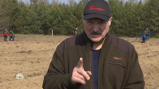 Вылечат трактор, баня ихоккей: куда заведет Белоруссию особый антивирусный путь Лукашенко.Белоруссия, карантин, коронавирус, Лукашенко, эпидемия.НТВ.Ru: новости, видео, программы телеканала НТВ