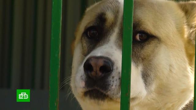 Беспризорные и домашние животные страдают от эпидемии COVID-19.ветеринария, животные, здоровье, коронавирус, кошки, собаки, эпидемия.НТВ.Ru: новости, видео, программы телеканала НТВ