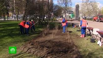 ВПетербурге расцветет «Сад памяти»