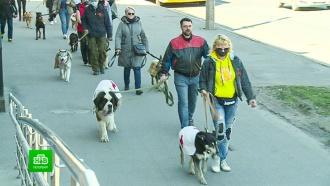 ВПетербурге провели акцию впамять о<nobr>собаках-фронтовиках</nobr>