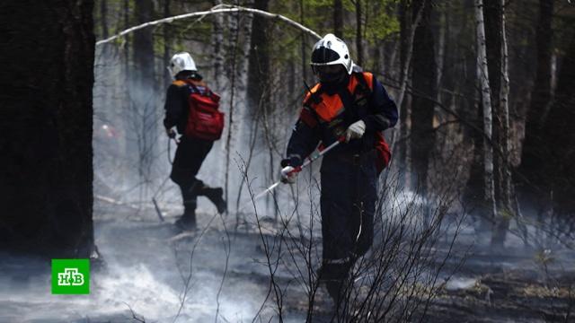 Отряд студентов-добровольцев потушил более 10 гектаров леса в Забайкалье.Забайкальский край, МЧС, волонтеры, лесные пожары.НТВ.Ru: новости, видео, программы телеканала НТВ