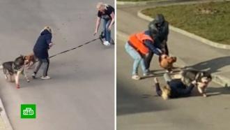 Скандалистка иее собака калечат соседей по элитному поселку