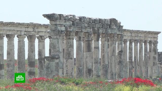 Сирия готовится открыть для туристов античный город Апамея.Сирия, археология, войны и вооруженные конфликты, история, туризм и путешествия.НТВ.Ru: новости, видео, программы телеканала НТВ
