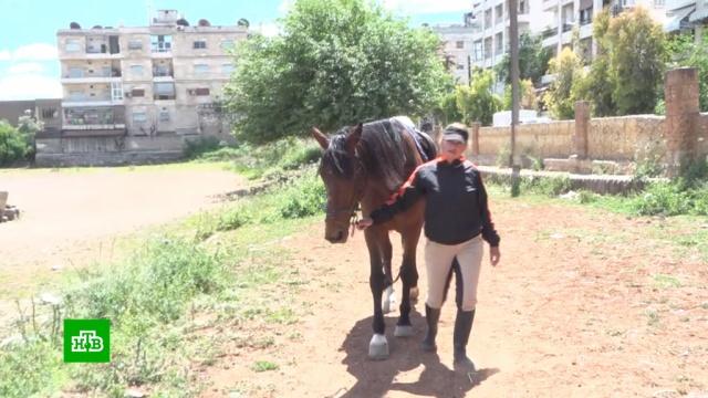 Сирия возрождает конные виды спорта.Сирия, войны и вооруженные конфликты, кони и конный спорт.НТВ.Ru: новости, видео, программы телеканала НТВ
