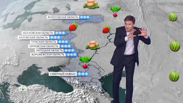 «Мартовский» май: какой урожай ждать дачникам в этом году.карантин, коронавирус, отдых и досуг.НТВ.Ru: новости, видео, программы телеканала НТВ