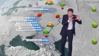 «Мартовский» май: какой урожай ждать дачникам в этом году.НТВ.Ru: новости, видео, программы телеканала НТВ