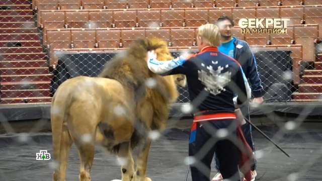 Почему Запашные назвали циркового льва вчесть Филиппа Киркорова.артисты, животные, знаменитости, львы, цирк, эксклюзив.НТВ.Ru: новости, видео, программы телеканала НТВ