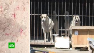 Два пса растерзали старую овчарку на глазах удевочки-хозяйки.НТВ.Ru: новости, видео, программы телеканала НТВ