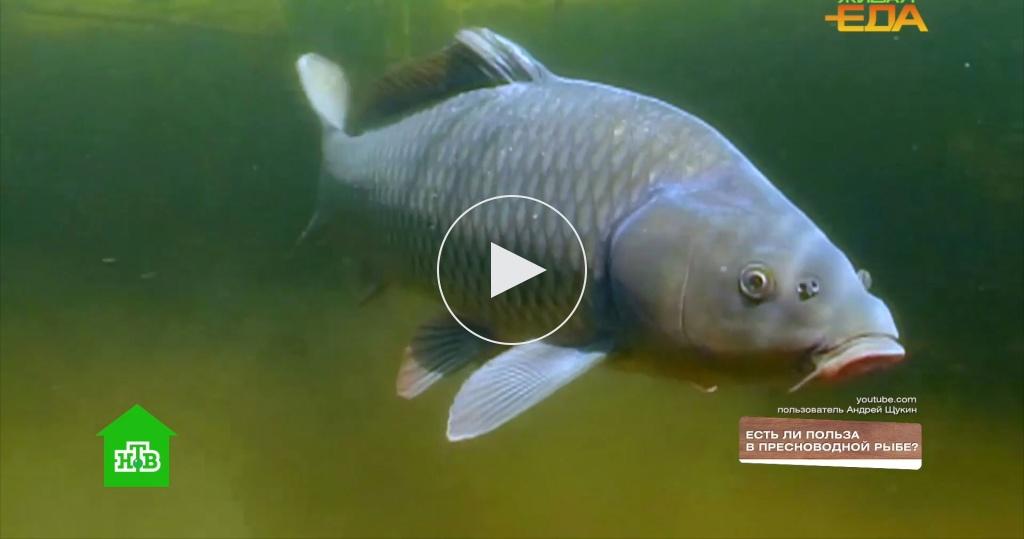 Вкуснейшие сиговые: естьли польза впресноводной рыбе