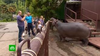 Пандемия затронула 50тыс. животных: зоопарки, дельфинарии ицирки просят опомощи