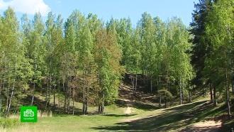 Жители Всеволожска защищают вековой лес от строительства местного «Зарядья»