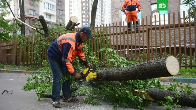 В Москве более 40 деревьев упали из-за непогоды.Москва, погода, штормы и ураганы.НТВ.Ru: новости, видео, программы телеканала НТВ