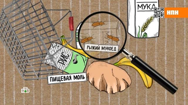 Как убить живущих на кухне и в постели паразитов.еда, насекомые, продукты.НТВ.Ru: новости, видео, программы телеканала НТВ
