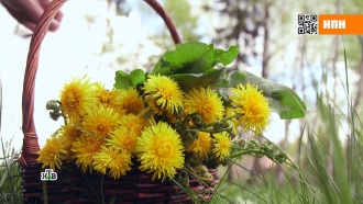 Вкусные иполезные сорняки: что можно приготовить из крапивы иодуванчика