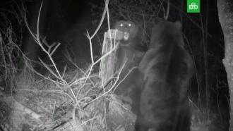 Медведи из России иКитая подрались на границе