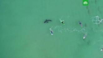 Жуткая встреча акулы-людоеда с серфингистами
