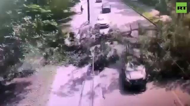 Дерево упало на проезжающее авто вПетербурге.Санкт-Петербург, погода, стихийные бедствия.НТВ.Ru: новости, видео, программы телеканала НТВ