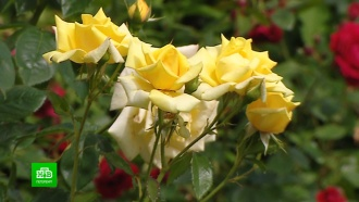Ботанический сад Петербурга открылся для посетителей