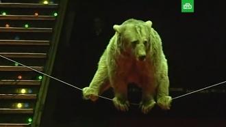 <nobr>Животные-рабы</nobr>: жестокое закулисье цирка