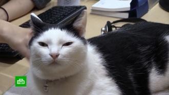 Как коты стали лидерами интернет-мемов и спасителями для людей на самоизоляции